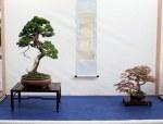 kokoro-no bonsai ten - 126