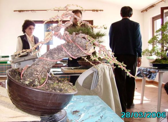 2008616125139_larice moyogi - 04