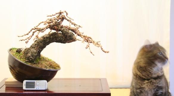 2008616125814_larice moyogi - 19