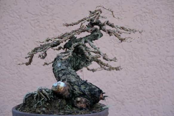 200861613030_larice moyogi - 25