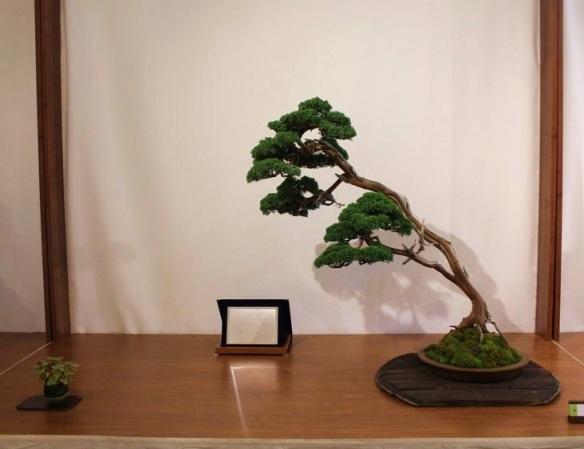 20136220113_II premio conifere