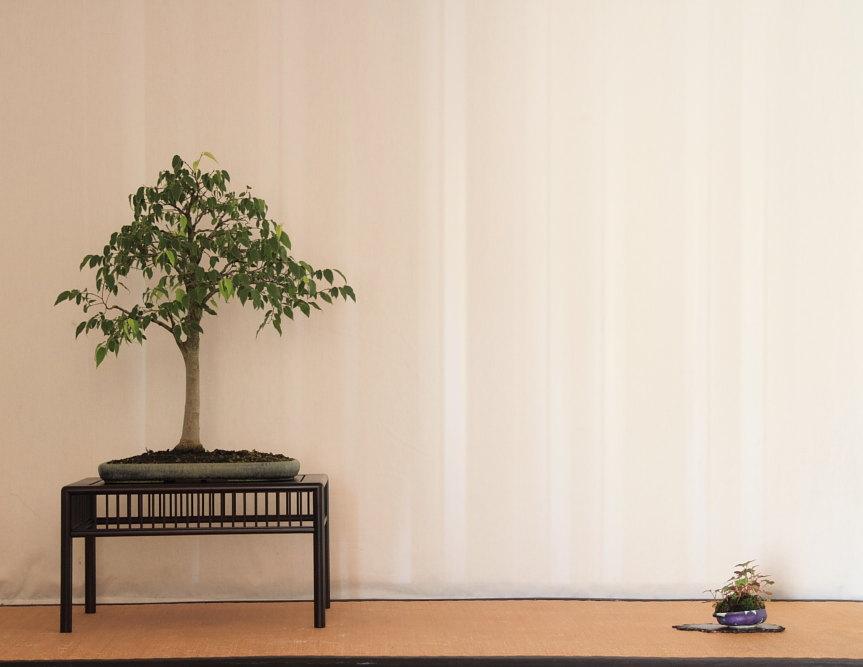 Programma del primo corso della Kitora's Bonsai School (5/6)