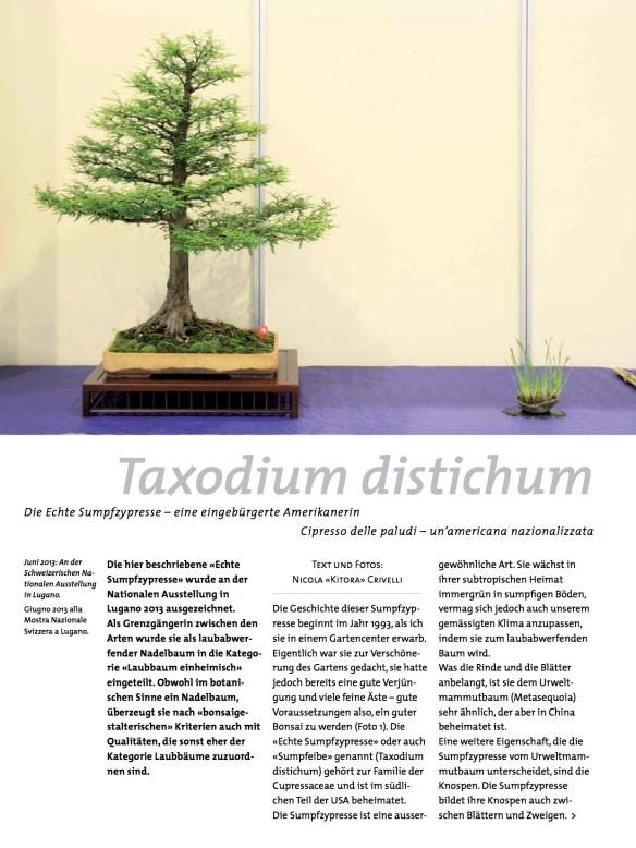 BK_70_NC_Taxodium-1