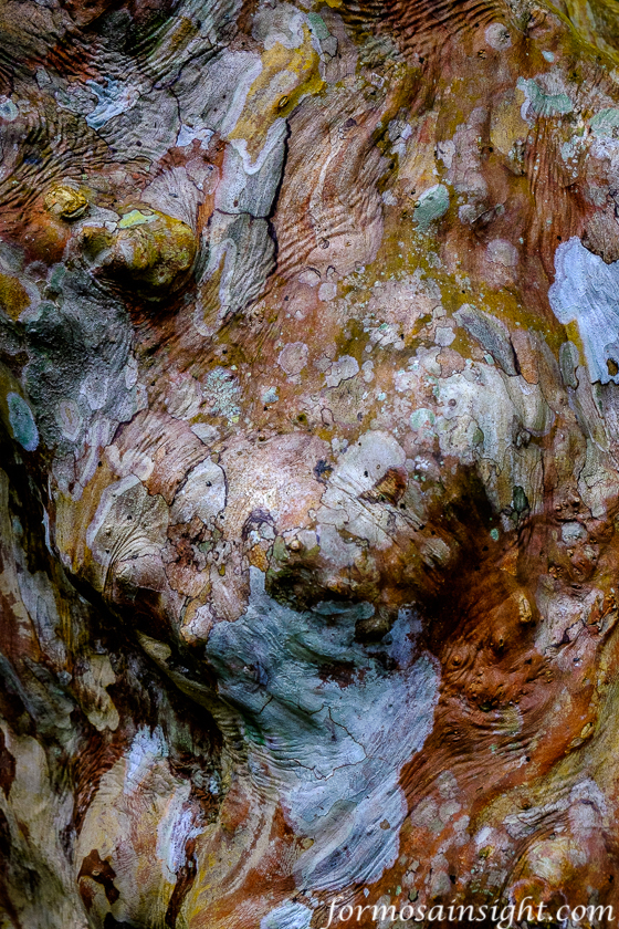 Tree Bark, Mugumuyu Gorge, Hualien County, Eastern Taiwan