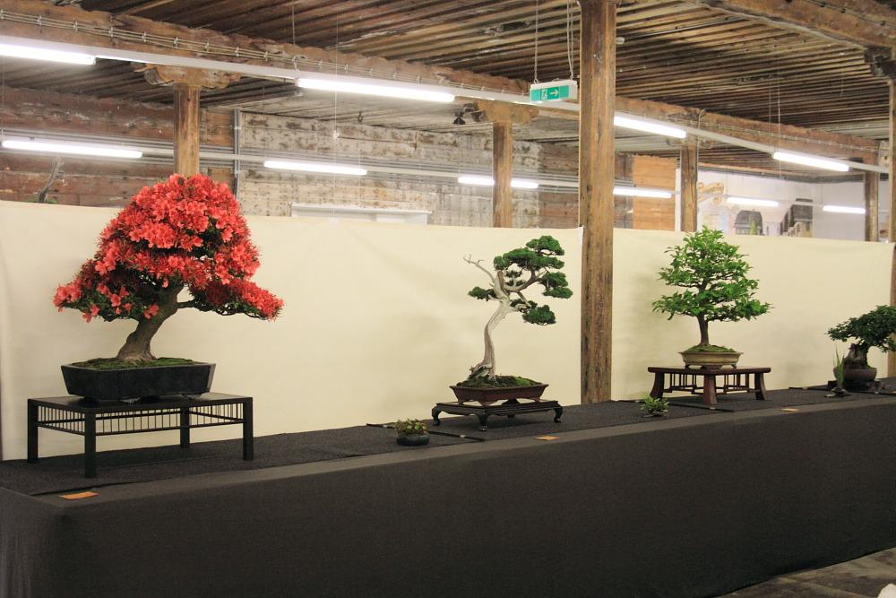 Internationales Bonsai- und Kusamonofest Hallein 2015 (2/6)