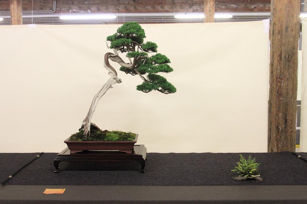 Internationales Bonsai- und Kusamonofest Hallein 2015 (3/6)