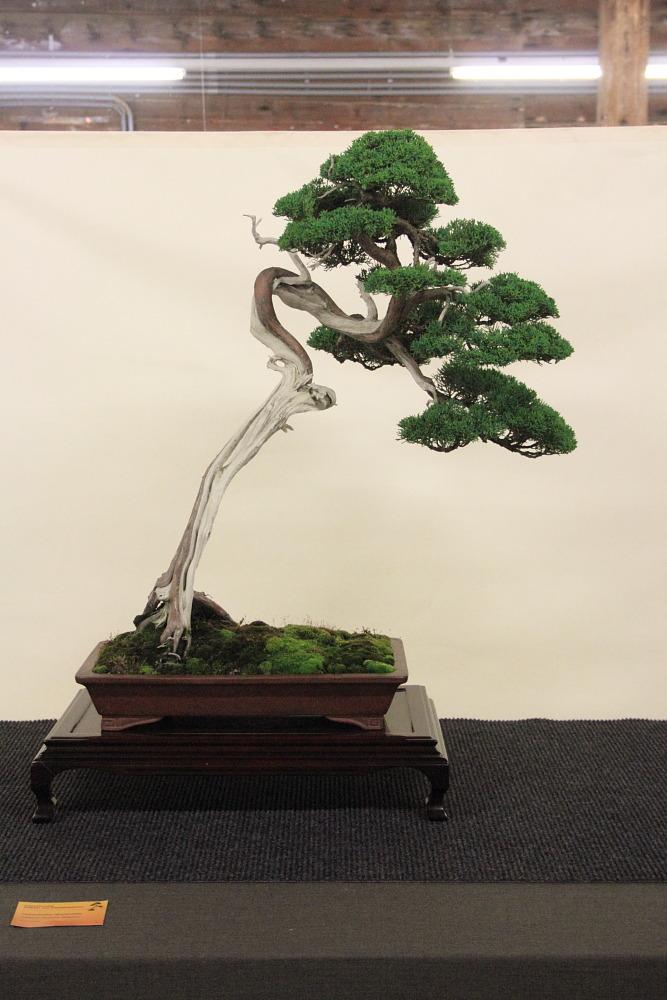 Internationales Bonsai- und Kusamonofest Hallein 2015 (4/6)
