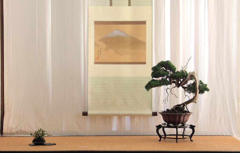 Shinpaku display (1/6)