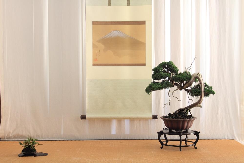 Shinpaku display (2/6)