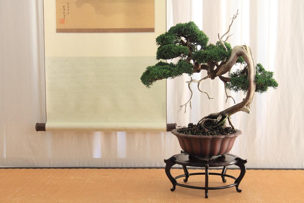 Shinpaku display (3/6)