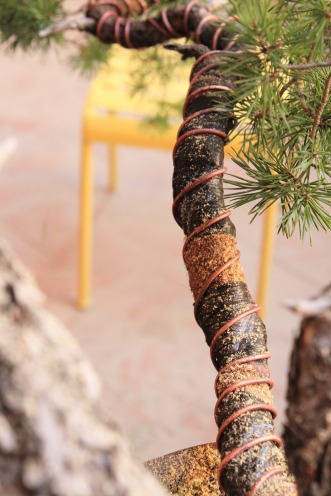 Si svuota il tronco in tre punti, viene poi fasciato con nastro di juta