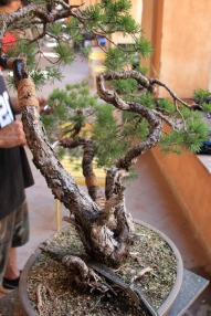 I tre tronchi